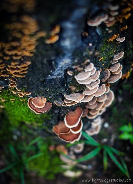 Shelves of Mushrooms