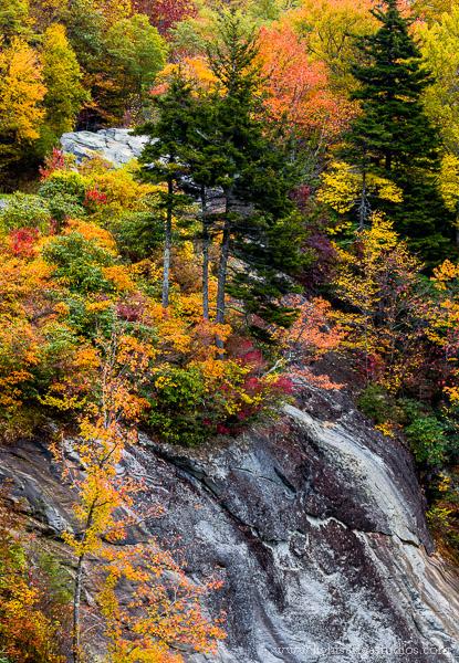 Fall color along the Blue Ridge Highway, North Carolina