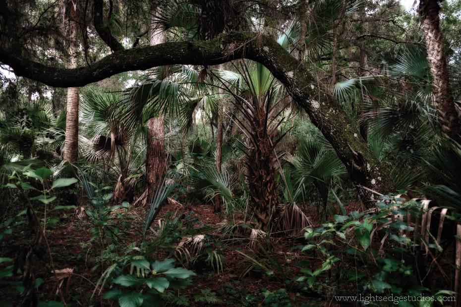 Oak Hammock Park, Port. St. Lucie, Florida